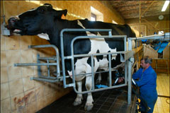 Ceny mléka v ČR jsou na úrovni zemí EU-15