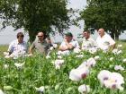 Nová legislativa EU zaměřená na zdraví rostlin