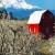 Kompenzace za jarní mrazy - ovocnáři